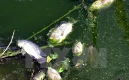 Cá chết bất thường phủ trắng trên thượng nguồn sông Sài Gòn