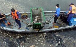 Đã vớt gần 70 tấn cá chết trên kênh Nhiêu Lộc - Thị Nghè