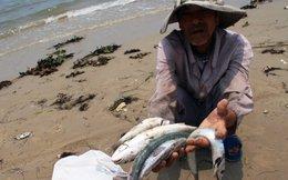 Ý kiến người dân Quảng Bình về hiện tượng cá chết