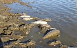 Cá chết hàng loạt ở Tân Kỳ, Nghệ An
