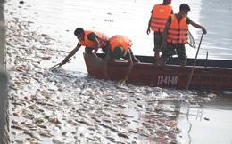 Cá chết hàng loạt ở Hồ Tây: Huy động Bộ Tư lệnh Thủ đô để vớt