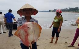 Dân bị thiệt hại do sự cố cá chết tại 4 tỉnh miền Trung chuẩn bị được nhận đền bù