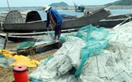 """Hàng trăm tấn cá nuôi lồng """"chết oan"""" vì...…Formosa"""