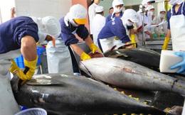 Xuất khẩu cá ngừ khởi sắc