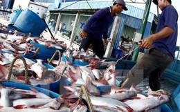 Cẩn trọng khi tăng diện tích nuôi cá tra