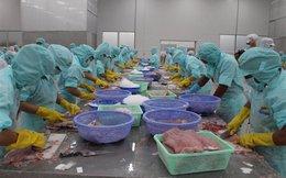 Xuất cá tra vào Hoa Kỳ, chỉ mua nguyên liệu của cơ sở được FSIS chấp thuận