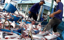 Trung Quốc có thể trở thành nước nhập khẩu cá tra lớn nhất của Việt Nam