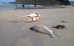 Lãnh đạo Hà Tĩnh báo cáo về vụ cá chết bất thường hàng loạt