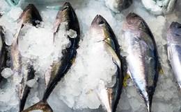 """Thiếu công nghệ bảo quản, cá ngừ Việt Nam long đong """"xuất ngoại"""""""