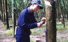 Cao su Đồng Phú (DPR): 9 tháng lãi 103 tỷ đồng, vượt 48% kế hoạch lợi nhuận cả năm