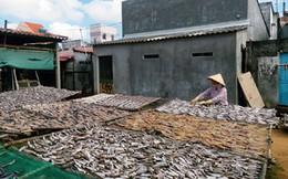 Thiếu nguồn nguyên liệu, làng nghề chế biến hải sản gặp khó