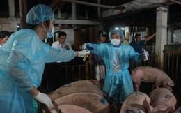 Heo Đồng Nai dính chất cấm vào Sài Gòn nhiều nhất