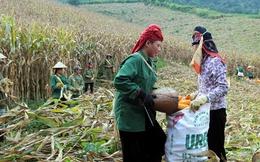 Nhập khẩu nguyên liệu thức ăn chăn nuôi gấp rưỡi xuất khẩu gạo