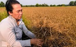 """PGS.TS Lê Anh Tuấn: Yêu cầu Trung Quốc xả lũ là việc """"lợi bất cập hại"""""""