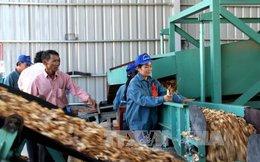 Nguy cơ thiếu gỗ nguyên liệu