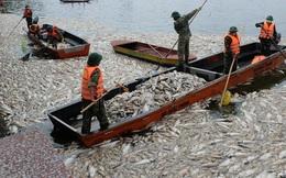 Gần 80 tấn cá chết được thu gom, chưa bao giờ Hồ Tây chết nhiều cá đến thế!