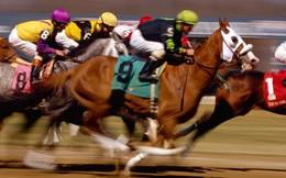 Dự án trường đua ngựa 1,5 tỷ USD ở Vĩnh Phúc có gì đặc biệt?
