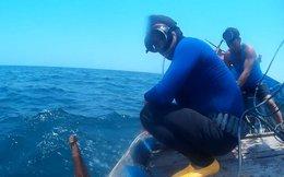 Đáy biển Quảng Bình: Cá chết không thấy, cá sống lèo tèo