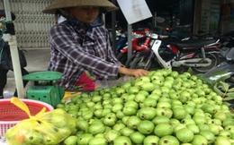 Ổi găng Hà Nội đắt hàng tại TP.HCM