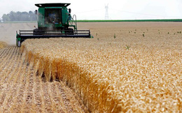 Giá lương thực giảm sau 5 tháng tăng liên tiếp