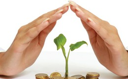 Vượt 36% chỉ tiêu lợi nhuận cả năm, Hạ tầng Vĩnh Phúc (IDV) trả tiếp 20% cổ tức bằng tiền