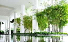 Diện tích cây xanh khu đô thị: Đắt xắt ra miếng
