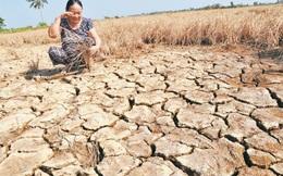Nhật Bản hỗ trợ 2,5 triệu USD cho người dân khu vực hạn hán