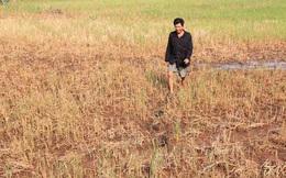 Hơn nửa triệu dân ĐBSCL thiếu nước sinh hoạt
