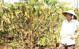 Doanh nghiệp nông sản: Chật vật ứng phó với nắng hạn