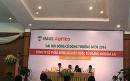 """Nếu không được Nhà nước hỗ trợ, HAGL Agrico sẽ bán đi 20.000 ha cao su, đã có đối tác Trung Quốc """"nhắm"""""""