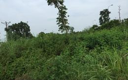 Ngỡ ngàng với cảnh cỏ mọc thành rừng dù đã ngốn 54 tỷ đồng mỗi năm ở Đại Lộ Thăng Long