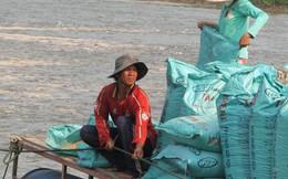 Cá tra hụt sản lượng nặng nhất trong vòng 20 năm