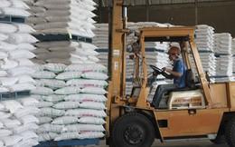 Đã có quy chế đấu giá nhập khẩu mặt hàng đường