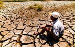 Hạn mặn kỷ lục: Thời điểm chín muồi cho tái cơ cấu nông nghiệp ở ĐBSCL?