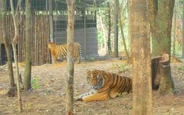 Vingroup lên tiếng về thông tin hàng ngàn thú chết ở Vinpearl Safari Phú Quốc