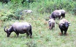 Lâm Đồng: 1.000 tỉ đồng cho dự án Công viên bảo tồn động vật hoang dã Tây Nguyên