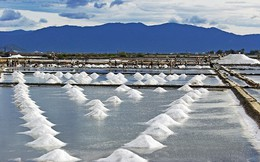 Bế tắc hạt muối Bạc Liêu, còn tồn hơn 94.000 tấn ngoài ruộng