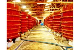 """Phó chủ tịch Hiệp hội nước mắm Phan Thiết: """"Vinastas đang làm méo mó hình ảnh của những người sản xuất nước mắm truyền thống"""""""