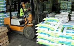 Chi hơn 2 tỷ USD nhập khẩu thức ăn chăn nuôi