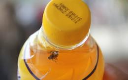 Người dân mua phải chai nước Number One có ruồi
