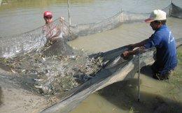 Kiên Giang, thiệt hại kép