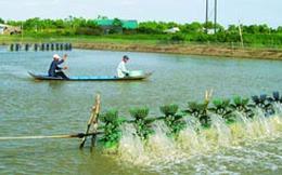 Giao Bộ Công an điều tra, khởi tố vụ giả giấy tờ kiểm định trên 800 sản phẩm thức ăn thủy sản