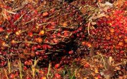 Nhà đầu tư vào dầu thực vật có thể kiếm bộn tiền trong những tháng tới