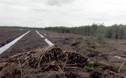 Người dân Tiền Giang ồ ạt phá rừng để trồng dứa và thanh long