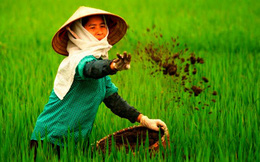 Phân bón Trung Quốc chiếm gần 45% thị phần nhập khẩu