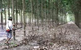 Tập đoàn cao su Việt Nam sẽ giao 1.800ha đất cho Bình Dương