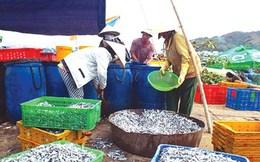 Bàn cách bảo vệ nguồn lợi cá cơm