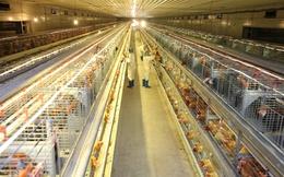 Nút thắt ngành chăn nuôi ở khâu giết mổ, chế biến