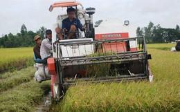 Kiểm tra 31 doanh nghiệp xuất khẩu gạo sang Trung Quốc