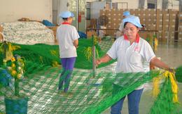 Di dời nhà máy, Dệt lưới Sài Gòn tính phương án khai thác mặt bằng hiện tại